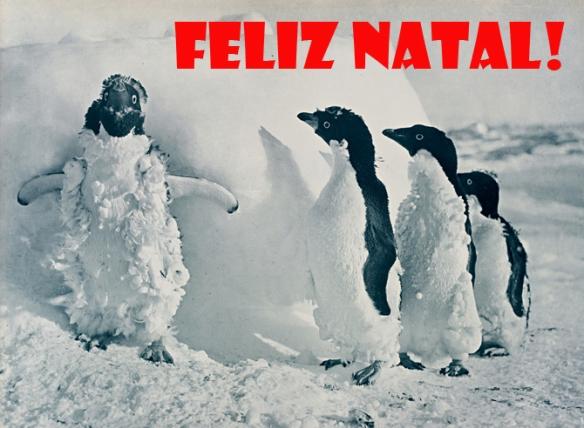 Adelie Penguins (foto da NatGeo)
