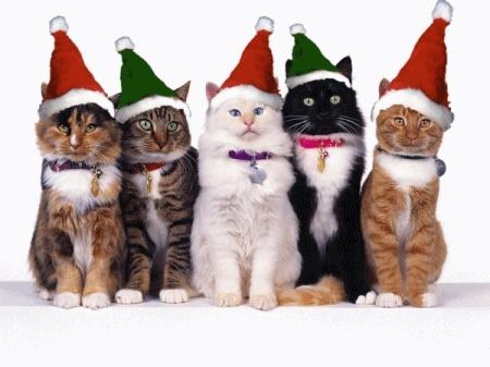 natal.gatos.14198090